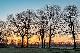 Dülmen, Dernekamp, Sonnenaufgang -- 2021 -- 6959-61.jpg