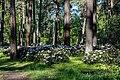 Dülmen, Welte, Rhododendronwald -- 2020 -- 6916.jpg