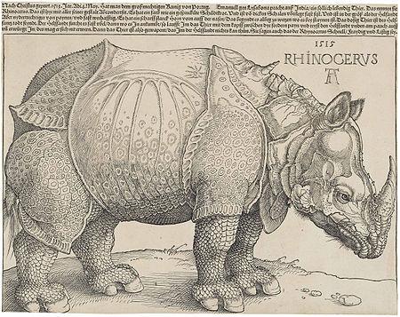 Rhinocerus (tác phẩm của Dürer)