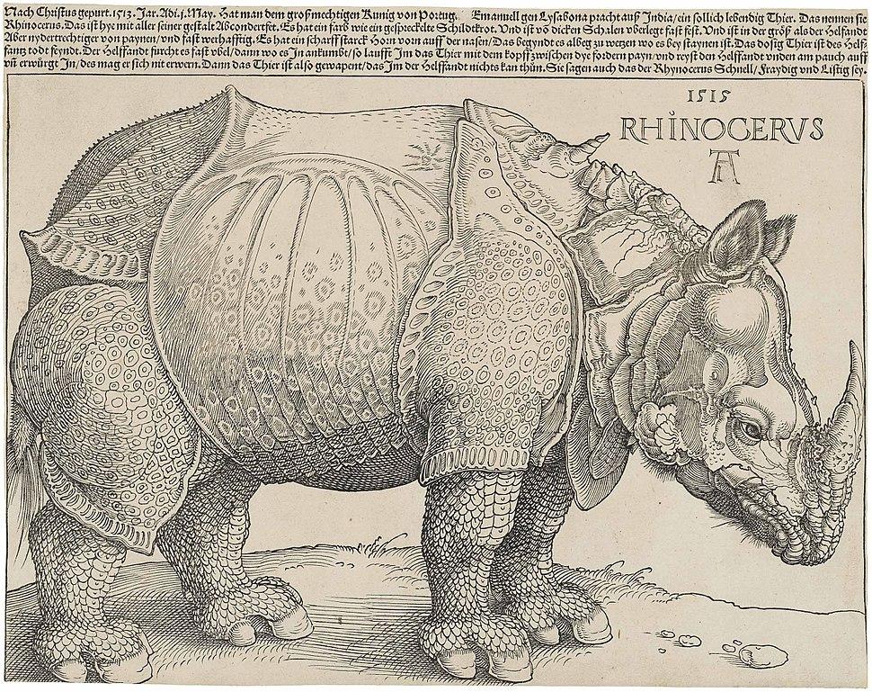 D%C3%BCrer%27s Rhinoceros, 1515