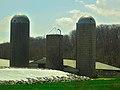 Dairy Farm with Three Silos - panoramio (7).jpg