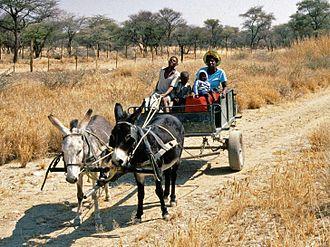 Damara people - Damara people in Damaraland, Namibia