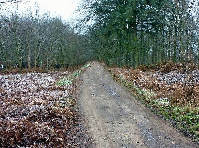 Dans la forêt de  Marchiennes sur le G.R. 121.  Parc naturel régional Scarpe-Escaut.-  Nord (département français)