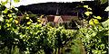 Das Kloster Bronnbach mit Weinberg.JPG