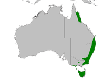Dasyurus maculatus distribution map.PNG