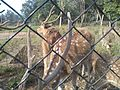 Deer Park at Kinnerasani Dam, Khammam, Telangana State 10.jpg