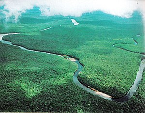 Orinoco - View of the Orinoco River in Mariusa National Park (Delta Amacuro)