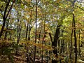 Devil's Lake State Park during Autumn - panoramio.jpg