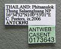 Diacamma scalpratum casent0173643 label 1.jpg