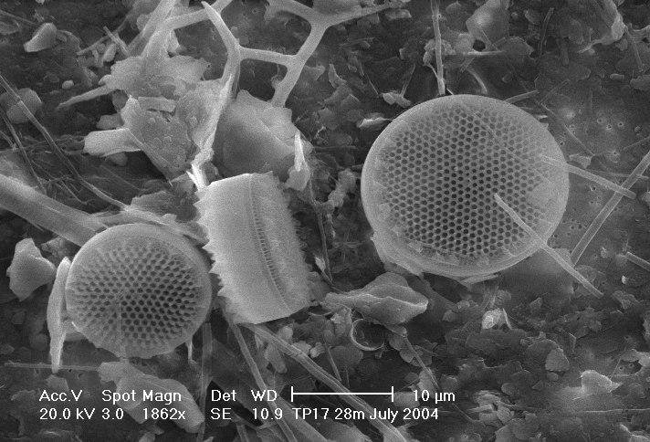 Diatoms-HCMR