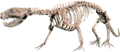 Didelphodon Clean.png