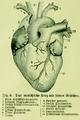 Die Frau als Hausärztin (1911) 008 Das menschliche Herz mit seinen Gefäßen.png