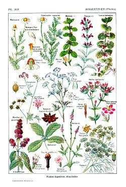 r and r medicinals amazon
