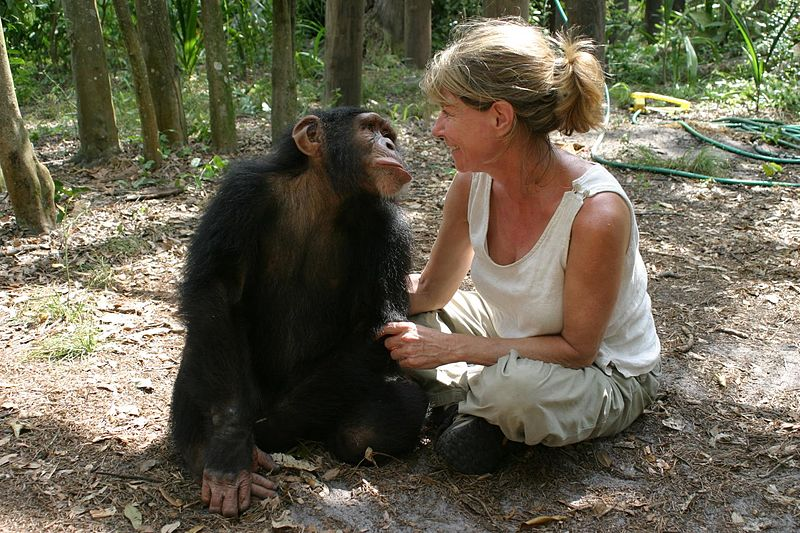 File:Director Allison Argo on location filming Chimpanzees, An Unatural History.jpg