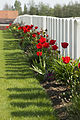 Dochy Farm New British Cemetery 1.JPG