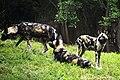 Dog Meeting (23070607983).jpg