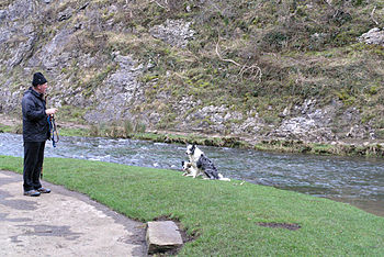 English: Dog training in Dovedale This pair of...