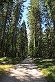Dolomiti 07-2010 - panoramio (11).jpg