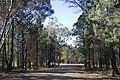 Dubbo NSW 2830, Australia - panoramio (66).jpg