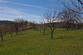 Duben vysenske kopce 01.jpg