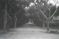 ETH-BIB-Allee in einem Garten zwischen Tunis und Algier-Nordafrikaflug 1932-LBS MH02-13-0088.tif