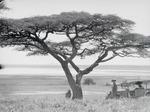 ETH-BIB-Larjasee mit Oldeani am Südrand der Serengeti-Kilimanjaroflug 1929-30-LBS MH02-07-0043.tif