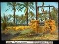 ETH-BIB-Tagiura, Brunnen-Dia 247-04335.tif