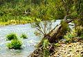 Ellenborough River Reserve.jpg