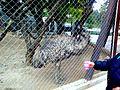 Emu cord.jpg