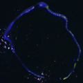 Enewetak Atoll 2005-09-01, EO-1 bands 10-8-2-1, 15m resolution, no annotations.png
