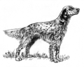English setter (PSF).png