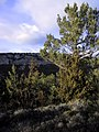 Entre Mont-ral i la Mussara 174-7404 IMG.jpg