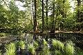 Erlenbruch Langwiesenholz 07.jpg