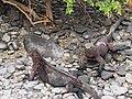 Espanola - Hood - Galapagos Islands - Ecuador (4871554036).jpg