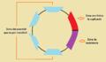 Estructura plasmidi r.png