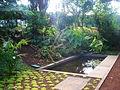 FAI HOR Fla BotanicalGarden Invasoras.jpg