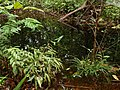 FLOODED LOWLAND - panoramio.jpg