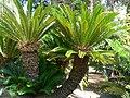 Fale - Giardini Botanici Hanbury in Ventimiglia - 630.jpg