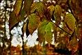Fall - panoramio (11).jpg