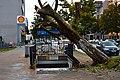 Fallen tree after storm Xavier. Spielvogel.jpg