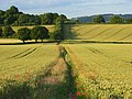 Farmland, Bledlow - geograph.org.uk - 892915.jpg