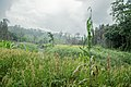 Farmland in Sangu Reserve Forest 2.jpg