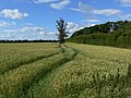 Farmland near Saxelbye Park, Leicestershire - geograph.org.uk - 909671.jpg