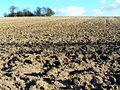 Farmland south of Kingston Lisle - geograph.org.uk - 666923.jpg