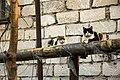 Feral cats in Chisinau.jpg