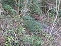 Ferns above Staplehill Road - geograph.org.uk - 1723883.jpg