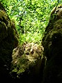 Ferns above the cave entrance - panoramio.jpg
