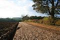 Field margin near Hill Top Farm - geograph.org.uk - 603542.jpg