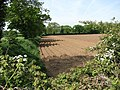 Field west of Goose Lane - geograph.org.uk - 798358.jpg