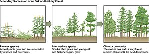 Secondary succession - Image: Figure 45 06 16
